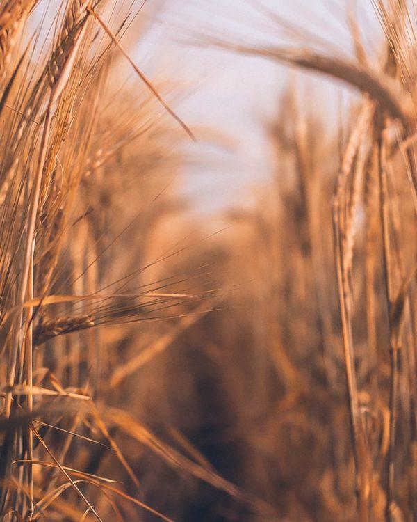 Volle Kraft aus vollem Korn